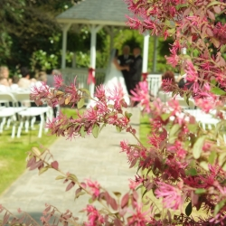 wedding_venue_greenville_sc0092